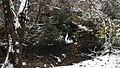Georgia snow IMG 4660.mp4 (38947471701).jpg