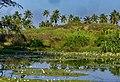 Goa - panoramio (2).jpg