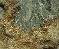 Gold-Calcite-162509.jpg