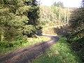 Gortin Glens Forest Park - geograph.org.uk - 116752.jpg
