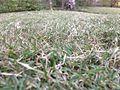Grass best.jpg
