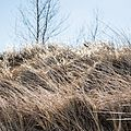 Grasses, Park Point, Duluth (33744001071).jpg