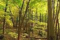 Gravel Family Nature Preserve (8) (30079246800).jpg