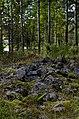 Gravröse Skellefteå.jpg