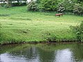 Grazing by the Stourbridge Canal. Staffordshire - geograph.org.uk - 438791.jpg