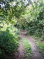 Green Lane near Wetwang - geograph.org.uk - 1430731.jpg