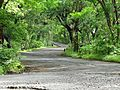 Green pathway.jpg