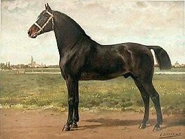 Groninger Paard Wikipedia