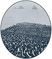 Guanay cormorant colony South Chincha Island.jpg