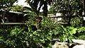 Guatemala - Antigua, Hotel Casa Santo Domingo - panoramio (5).jpg