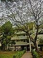 HK 油麻地 Yau Ma Tei 九龍華仁書院 Kowloon Wah Yan College back door campus garden Jan-2014 trees.JPG