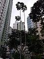 HK 灣仔 Wan Chai 聖佛蘭士街 St. Francis Street near 星街 Star Street March 2020 SS2 16.jpg