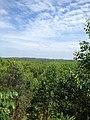 HTI (Hutan Tanam Industri) Bengkalis 08.jpg