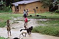 Habitation du village de Tayap (Cameroun).jpg