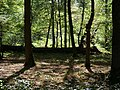 Hambach forest 49.jpg