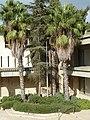 Hebrew Union College Campus, Jerusalem P1190186.JPG