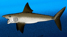 Helicoprion - Wikipedia