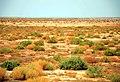 Hendijan - Always Persian gulf - هندیجان سواحل خلیج همیشه فارس - panoramio.jpg