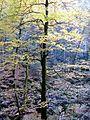 Herbststimmung in der Buchberger Leite.jpg