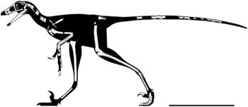 Hesperornithoides skeletal reconstruction.png