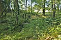 Hidden woodland stream - Aberglasney - geograph.org.uk - 1484353.jpg