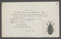 Hispa - Print - Iconographia Zoologica - Special Collections University of Amsterdam - UBAINV0274 036 19 0003.tif