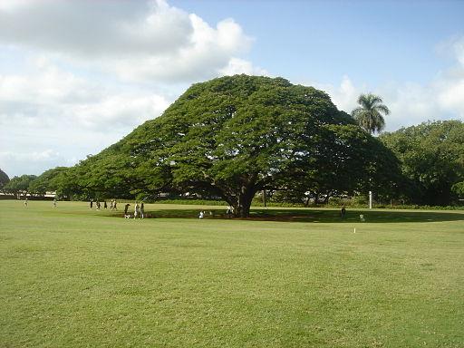 Hitachi's tree