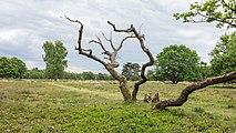 Hondsrug, De Strubben-Kniphorstbosch 21.jpg