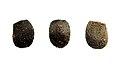 Hoploclonia cuspidata - eggs.jpg