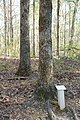 Horseshoe Bend NMP DSC 0330 (5586612260).jpg