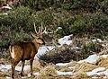 Huemul Reserva Cerro Castillo 3.jpg