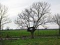 Huisberden Schlenk PM20-09.jpg