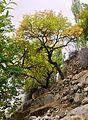 Hunza Autumn.JPG