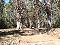 Ile Sainte Marguerite - panoramio - Alistair Cunningham (5).jpg