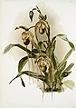 Illustration from Reichenbachia Orchids by Frederick Sander, digitally enhanced by rawpixel-com 123.jpg