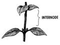 Internode (PSF).png
