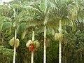 Jardim Botânico (Botanical Garden) (3454608573).jpg
