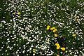 Jarní kvítí.jpg