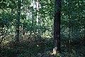 Jesienny spacer - panoramio (10).jpg