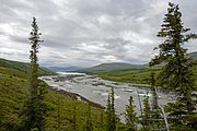Joe Creek with spruce trees, Ivvavik National Park, YT.jpg