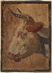Hoved af en hvidbroget ko, profil mod venstre