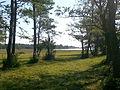 Jungfruskär Pargas meadows 4.jpg