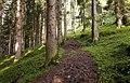 Juns forest trail.jpg