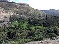 KALOR SUBTROPIKAL - panoramio.jpg