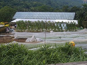 Agriculture and aquaculture in Hong Kong - Farm in Hong Kong