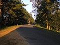 Kampinoski Park Narodowy okolice palmir 02.JPG