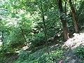 Kaniv Nature Reserve (May 2018) 102.jpg
