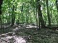 Kaniv Nature Reserve (May 2018) 12.jpg