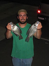 Kerr Crappies.jpg