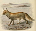 Keulemans white footed fox.png